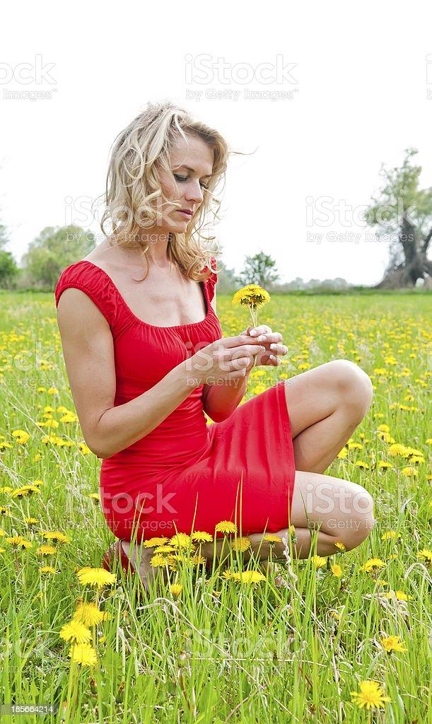 woman picking dandelion stock photo