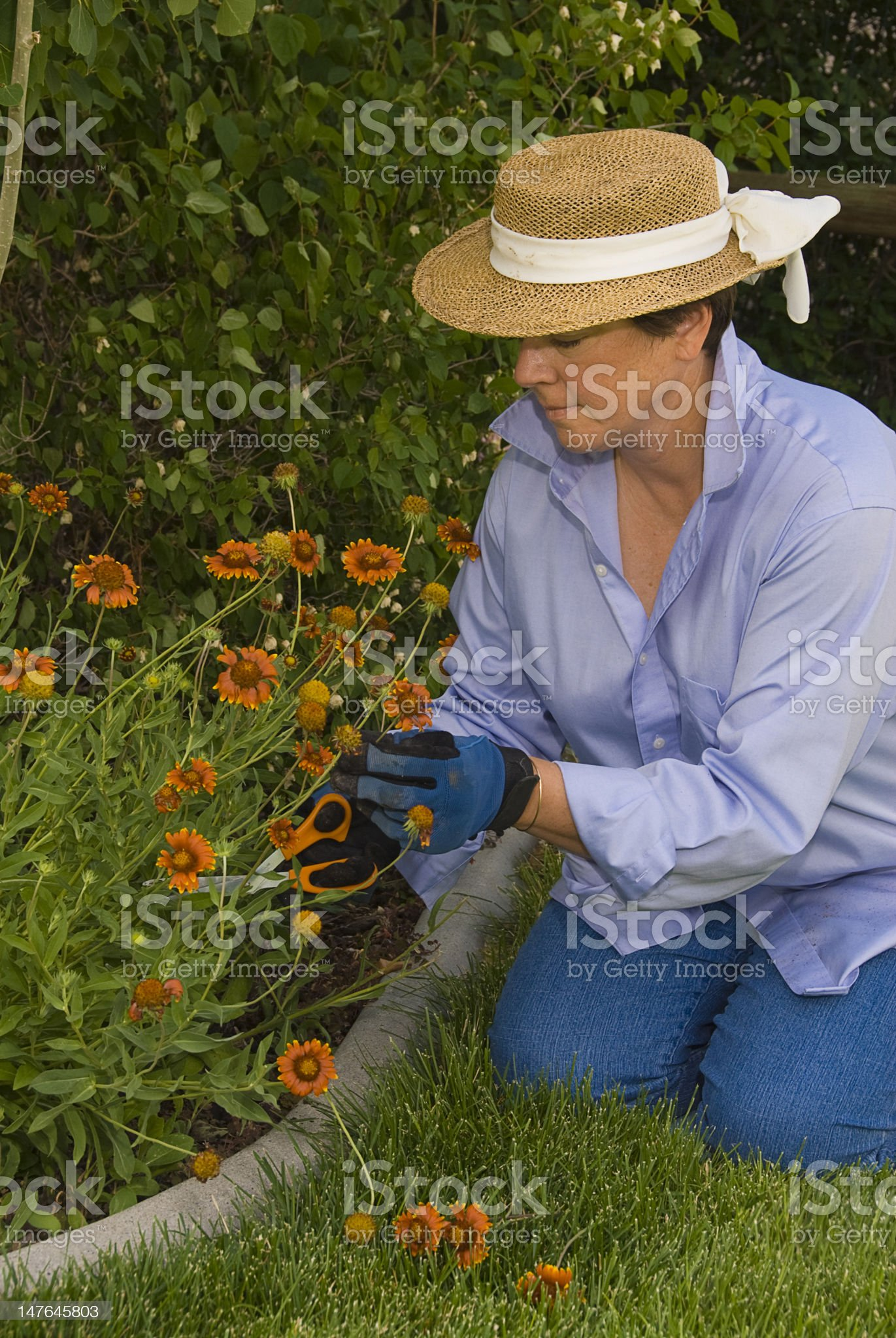 Woman Picking Flowers in the Garden royalty-free stock photo