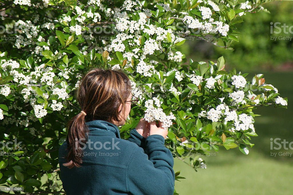 Woman Picking Flowers royalty-free stock photo