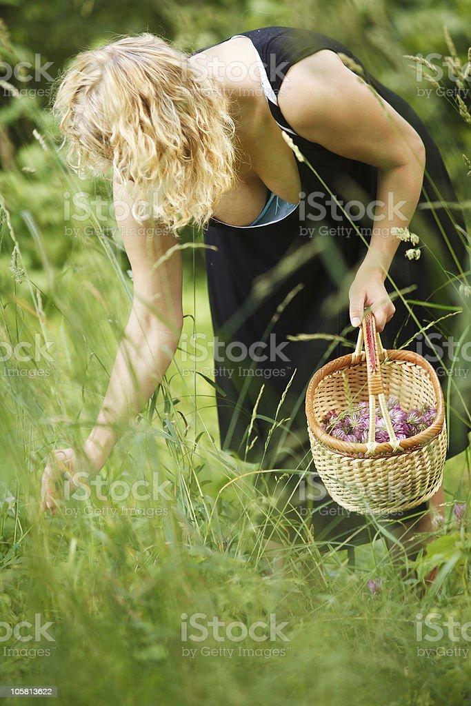 Woman picking herbal tea royalty-free stock photo
