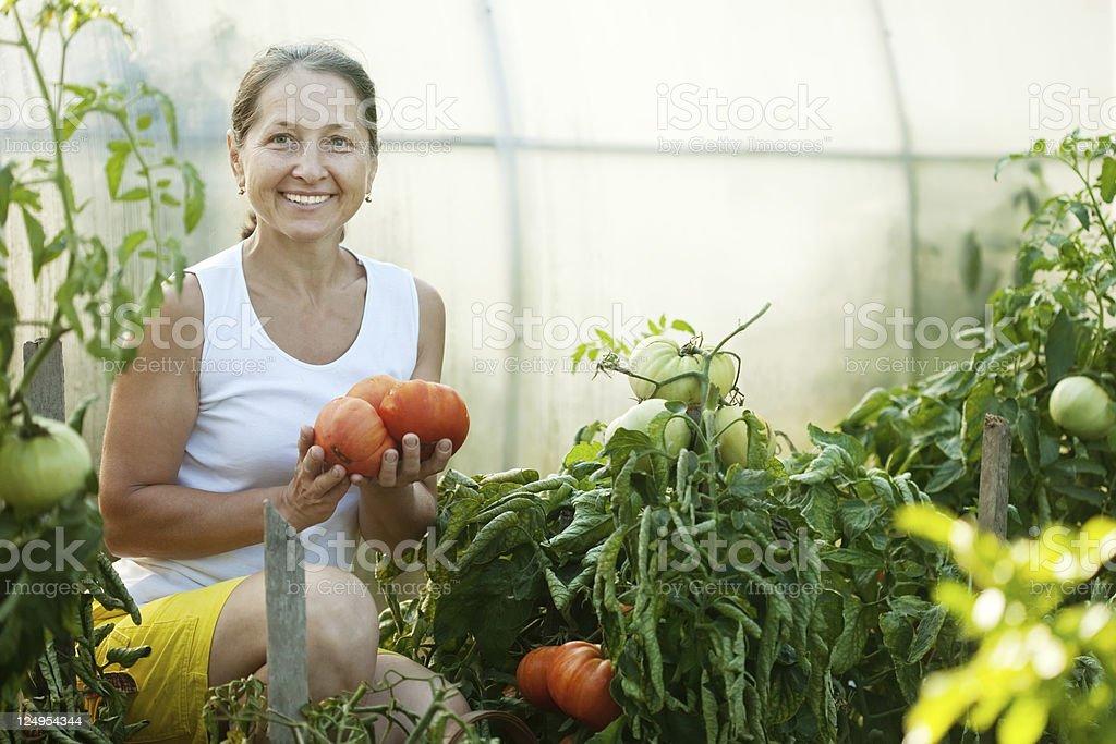 woman picking tomato royalty-free stock photo