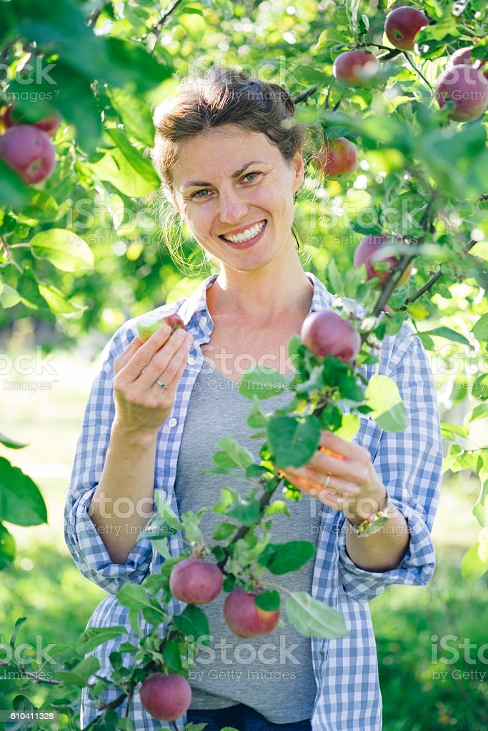 Woman picking up apples stock photo