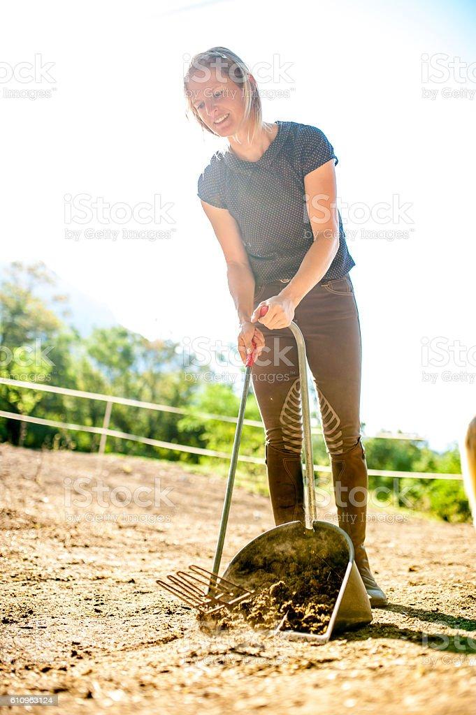 Woman Picking Up Horses Manure stock photo