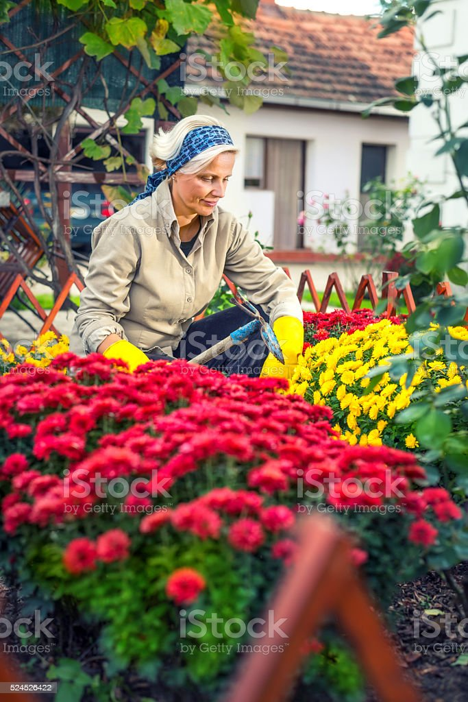 Woman planting flowers stock photo
