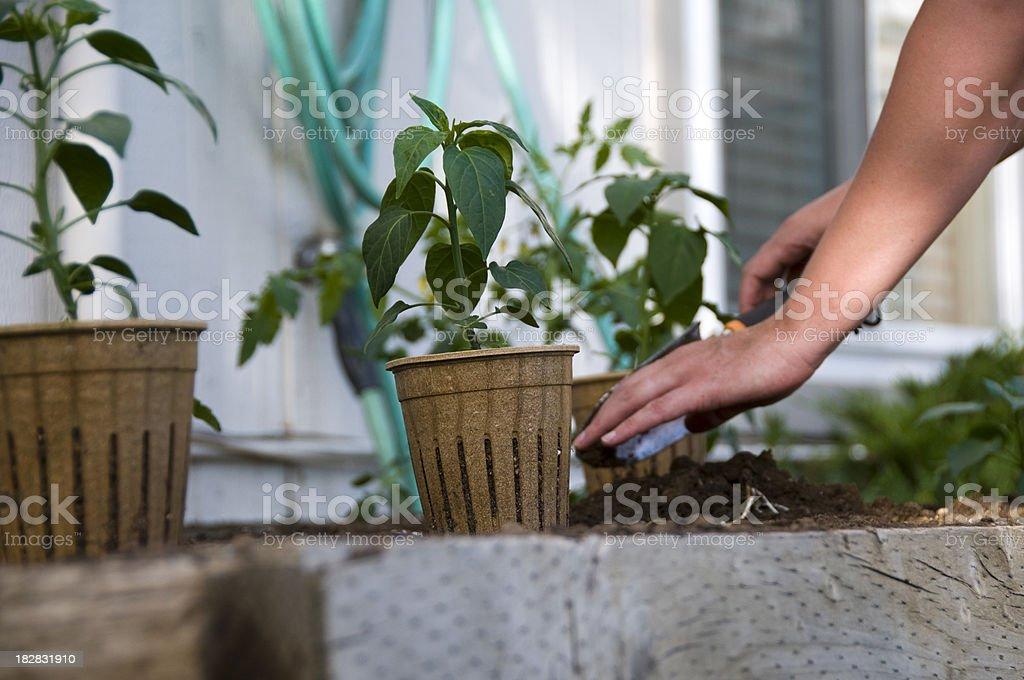 Woman Planting Garden stock photo