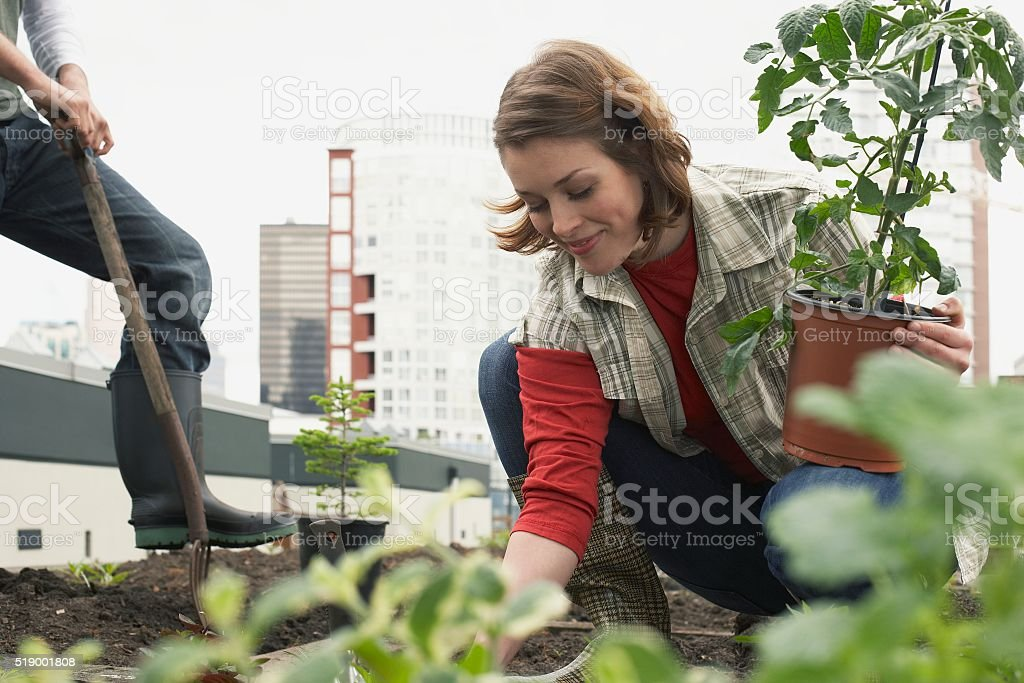 Woman planting roof garden stock photo