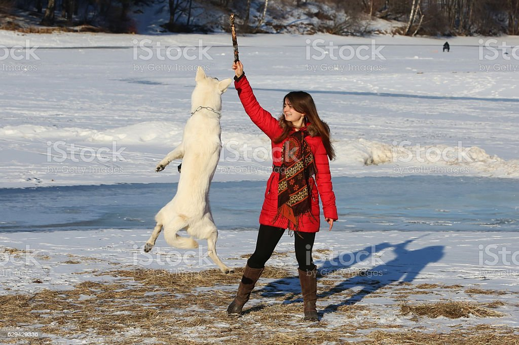 Woman playing with white swiss shepherd dog stock photo