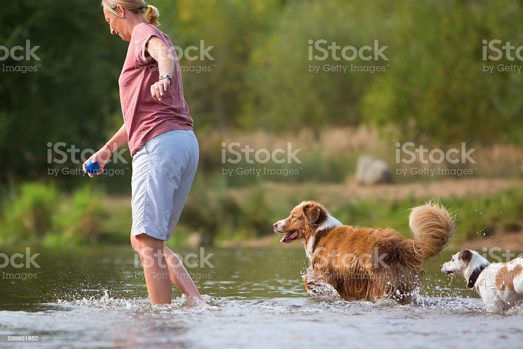 woman plays with an Australian Shepherd dog in a river stock photo