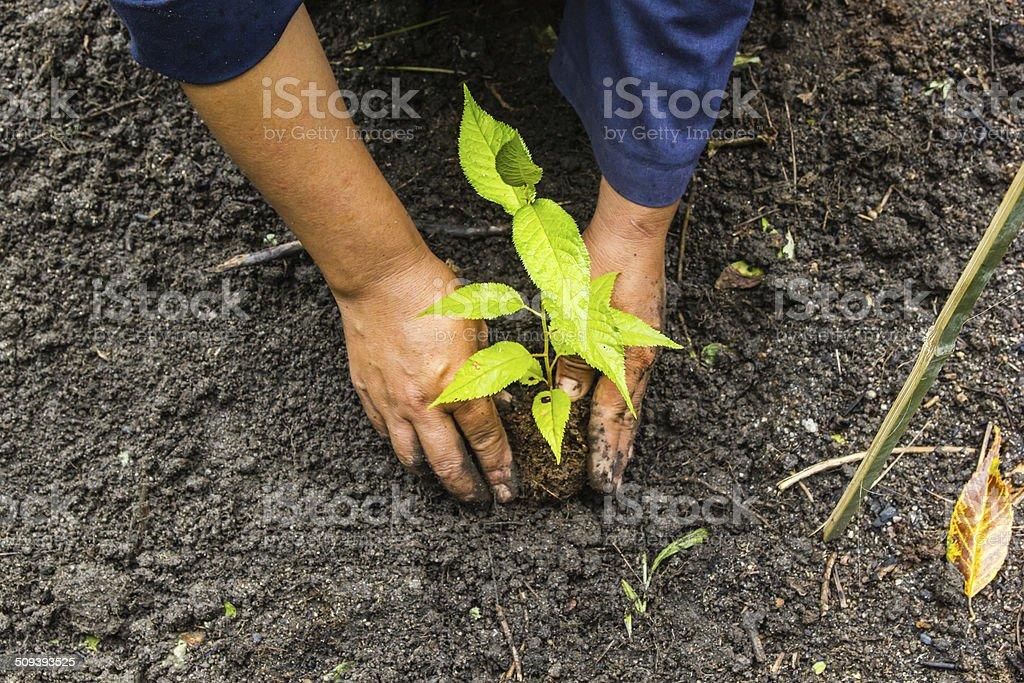Woman puts a plant stock photo