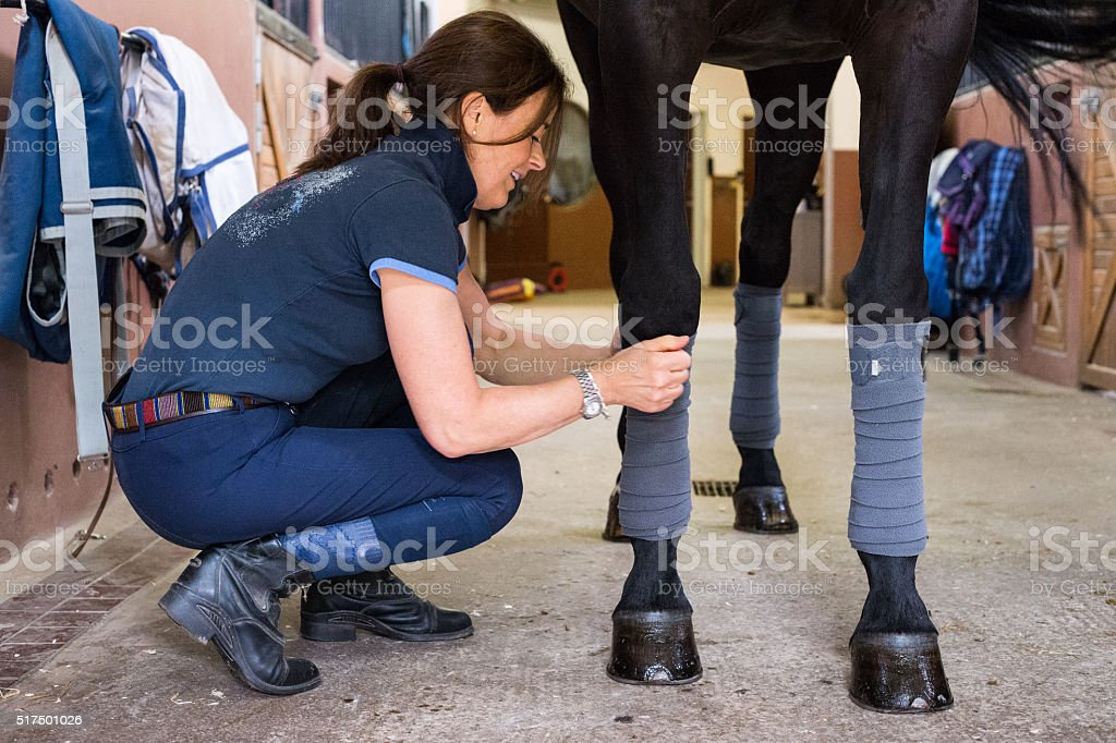Woman putting polo wraps on black dressage horse stock photo