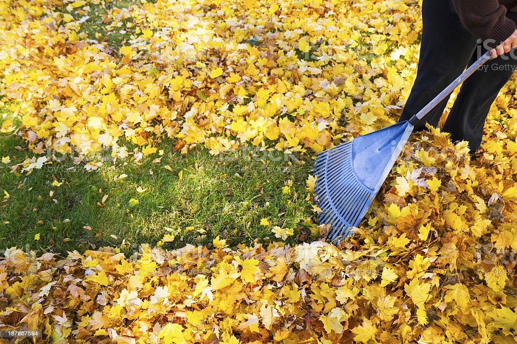 Woman Raking Fall Leaves stock photo