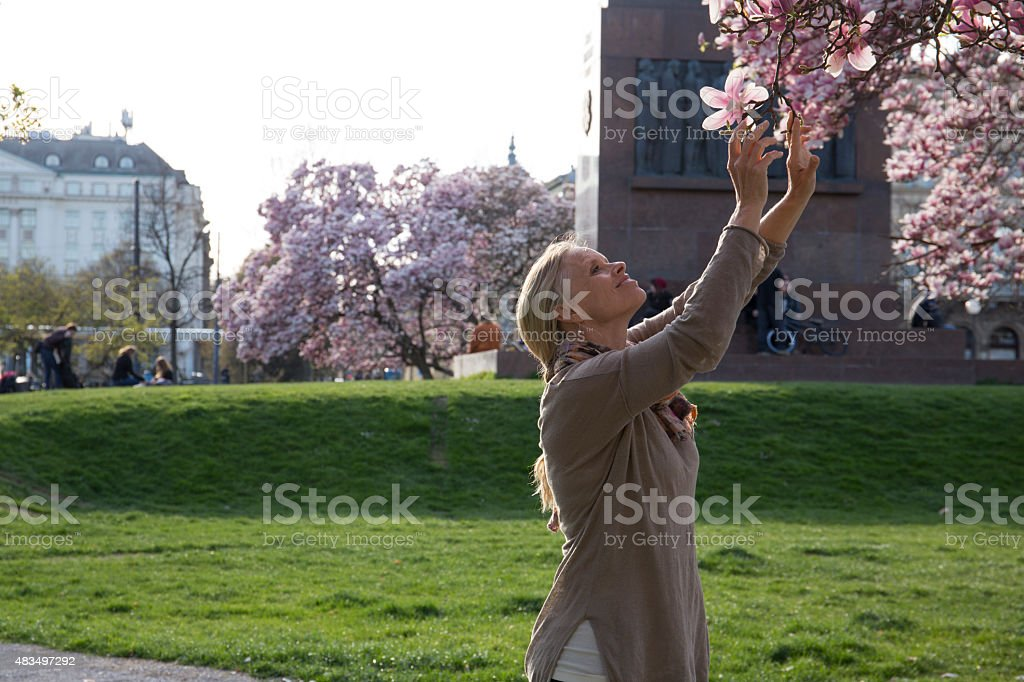 Woman reaches up to smell magnolia blossom, spring stock photo