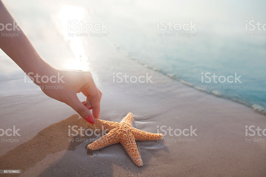 Woman reaching for starfish on the beach stock photo