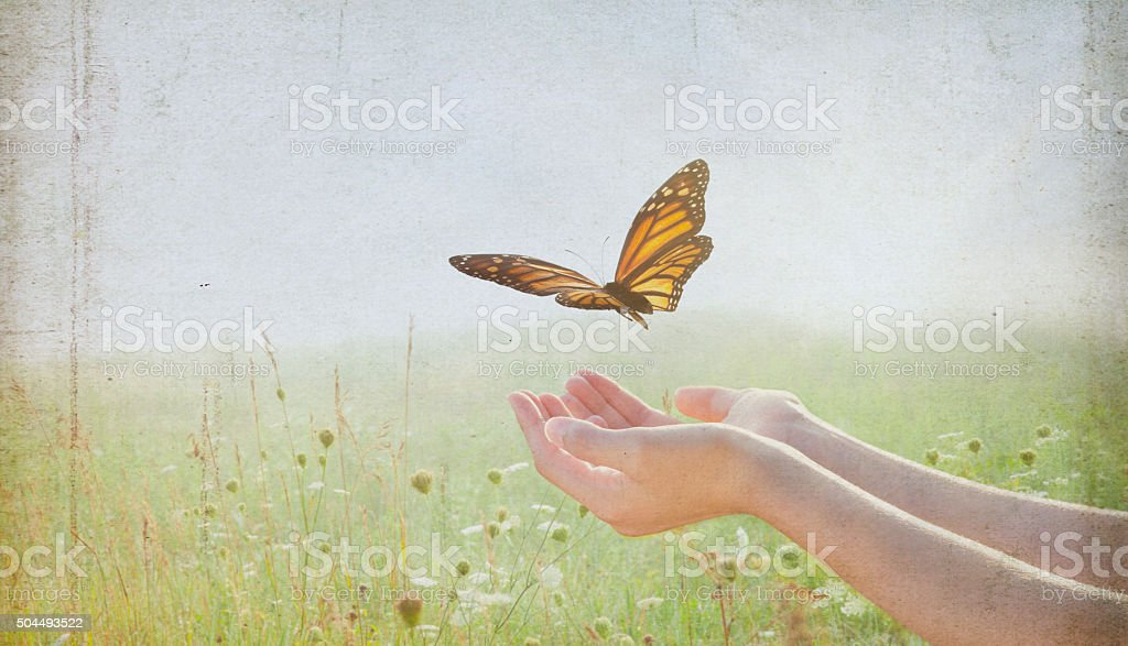 Woman Release a Monarch Butterfly into Wildflower Field stock photo