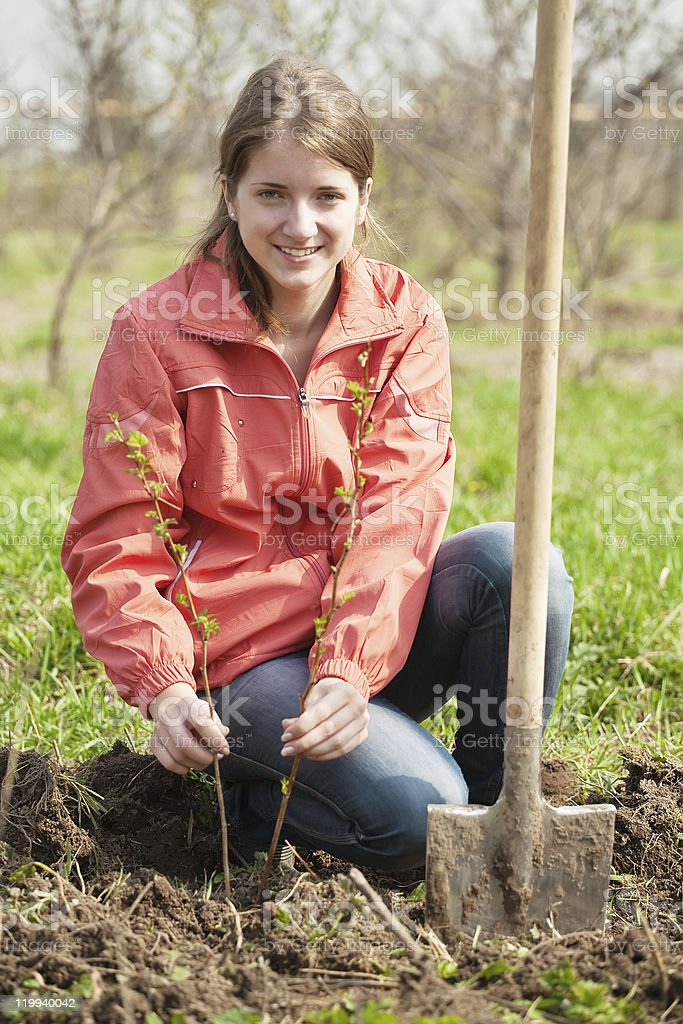 woman resetting  raspberry sprouts royalty-free stock photo