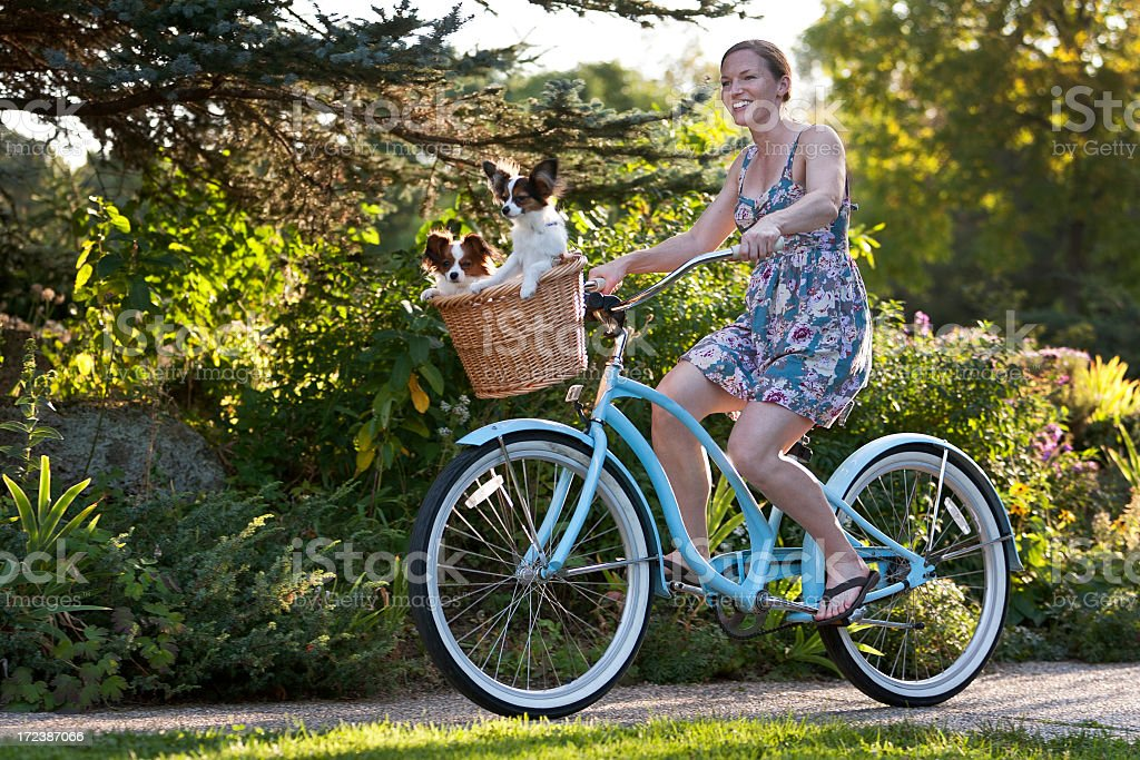 Woman Riding Bicycle With Papillon Dogs in Basket. royalty-free stock photo