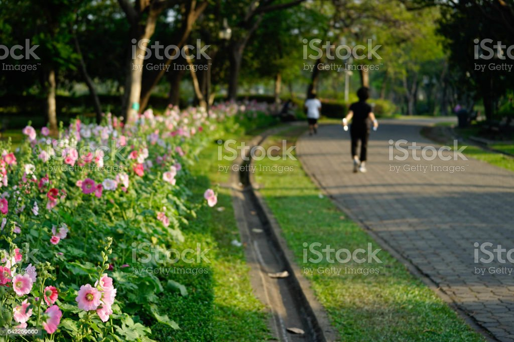 Woman running on the track in the park stock photo