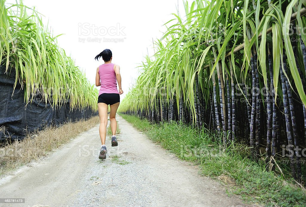 woman running on the trail at sugarcane field royalty-free stock photo