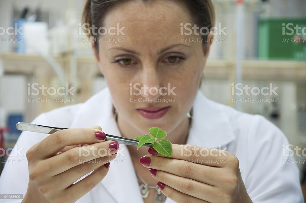 Woman scientist in white examining green leaves with tool stock photo