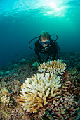 woman scuba diver looks ar reef