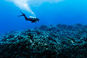 Woman Scuba Diving Over Huge Reef in Rangiroa, French Polynesia
