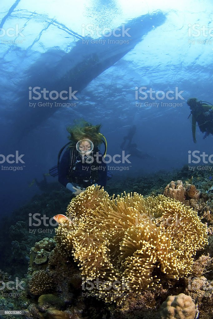Woman scuba-diver behind big anemone and soft coral near surface. royalty-free stock photo