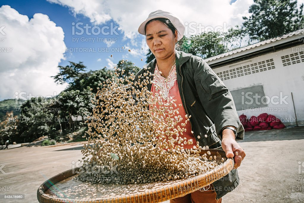 Woman selecting coffee beans . stock photo