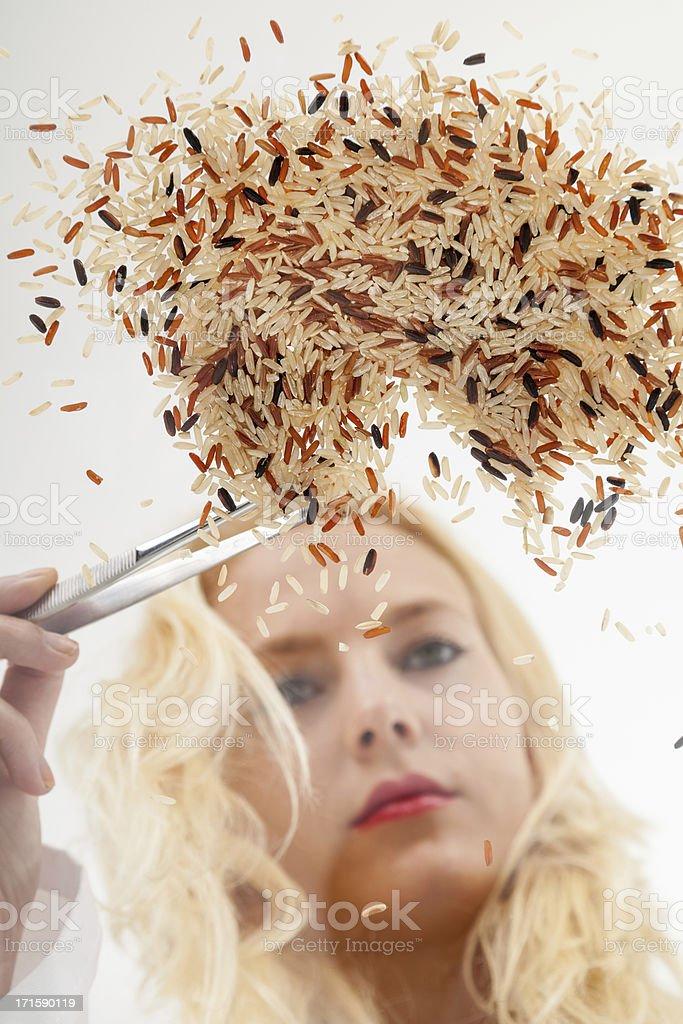 Woman selecting geneticly modified rice with tweezers. stock photo