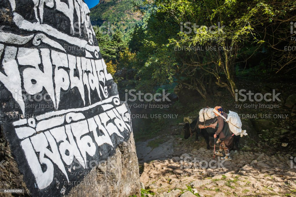 Woman Sherpa yak driver Himalaya mountain trail mani stone Nepal stock photo