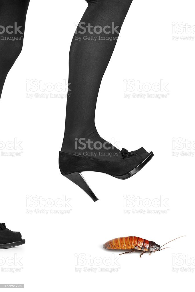 Woman shoe about to step on a cockroach royalty-free stock photo