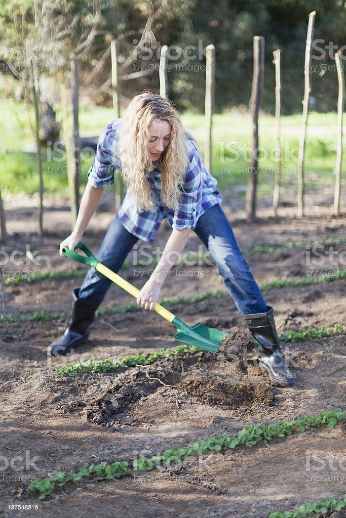 Woman shoveling dirt in garden stock photo