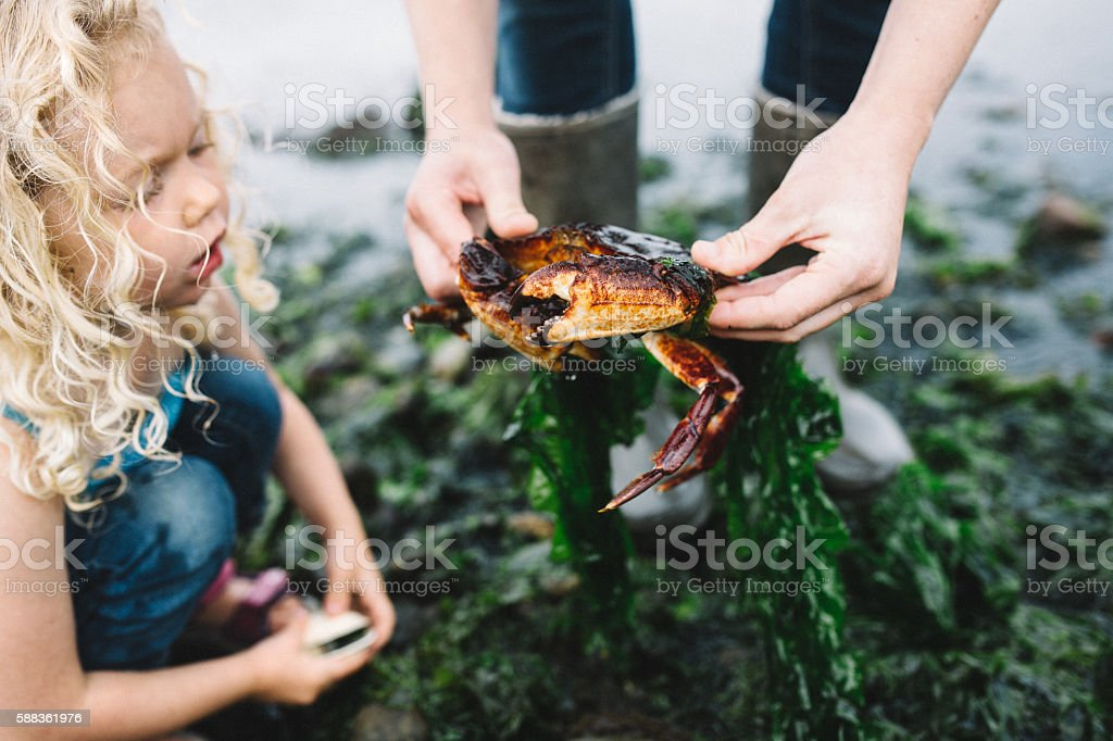 Woman Showing Girl a Crab stock photo