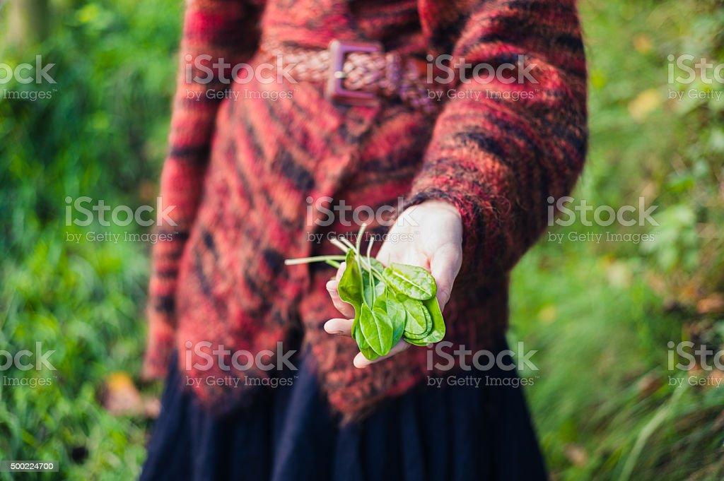Woman showing handful of sorrel stock photo