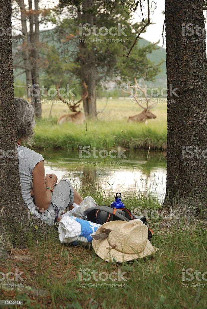 Woman Sketching Elk royalty-free stock photo