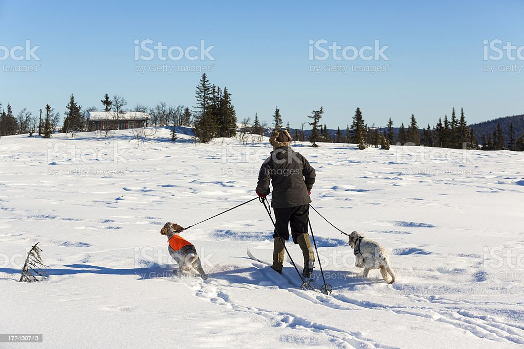 Woman skiing with her dogs in the mountains, Norway royalty-free stock photo