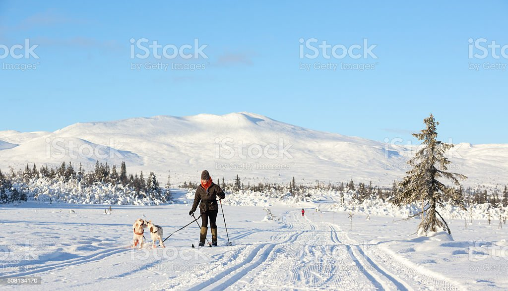 Woman skiing with her dogs, Synnfjell mountain Norway stock photo