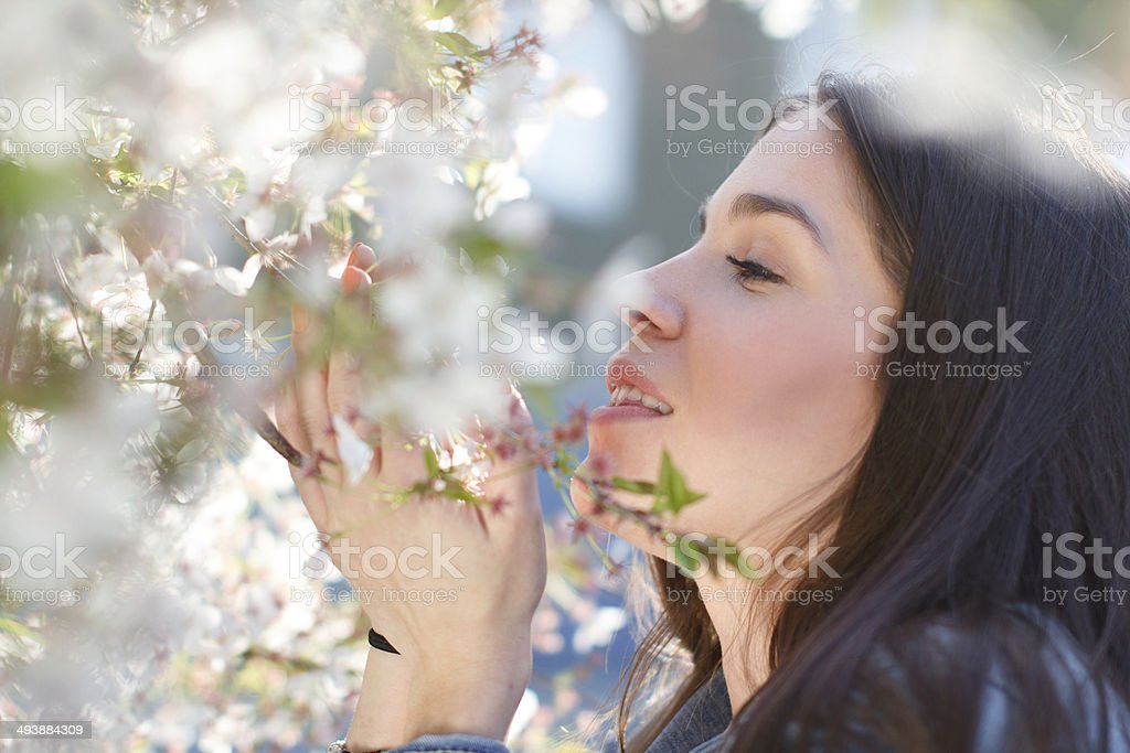 Woman smell cherry tree flower royalty-free stock photo