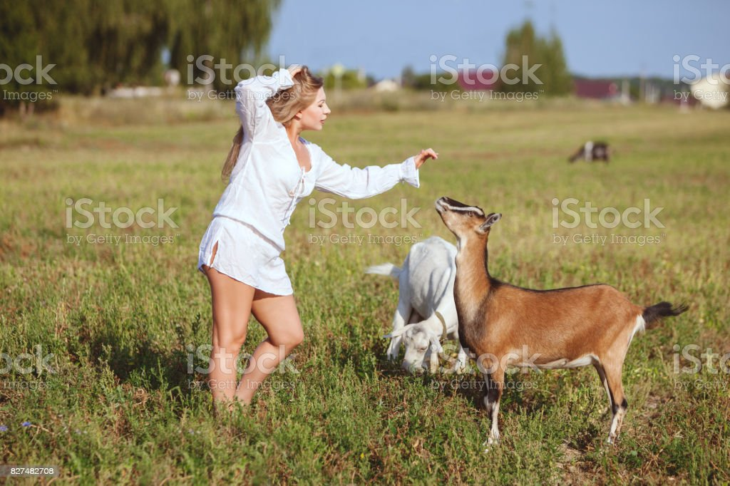 Woman stroking domestic goat. stock photo
