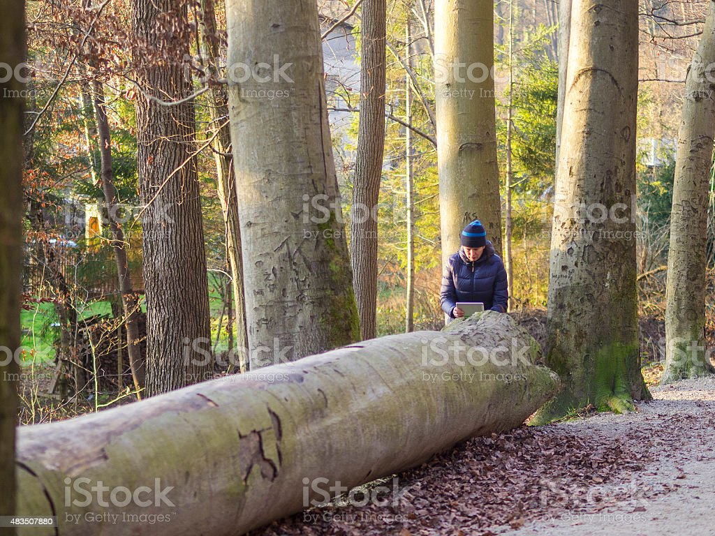 Woman taking a photo of big tree at Christmas time. stock photo