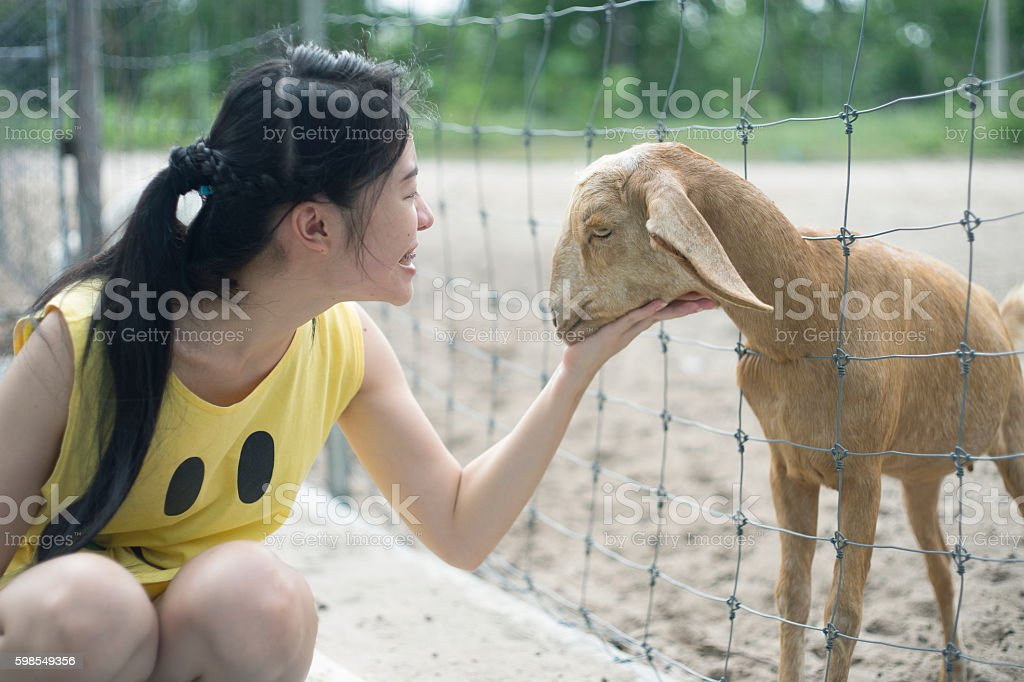 woman tease a goat in paddock, play with a goat stock photo