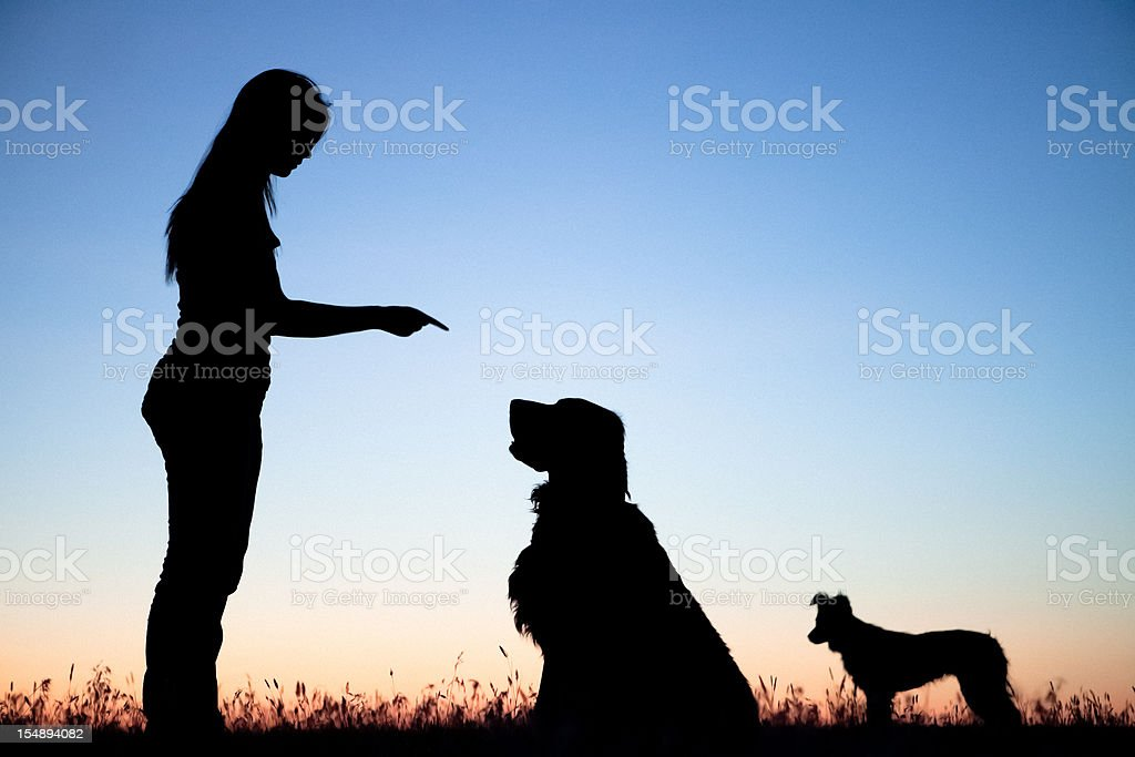 Woman Telling Dog To Stay stock photo