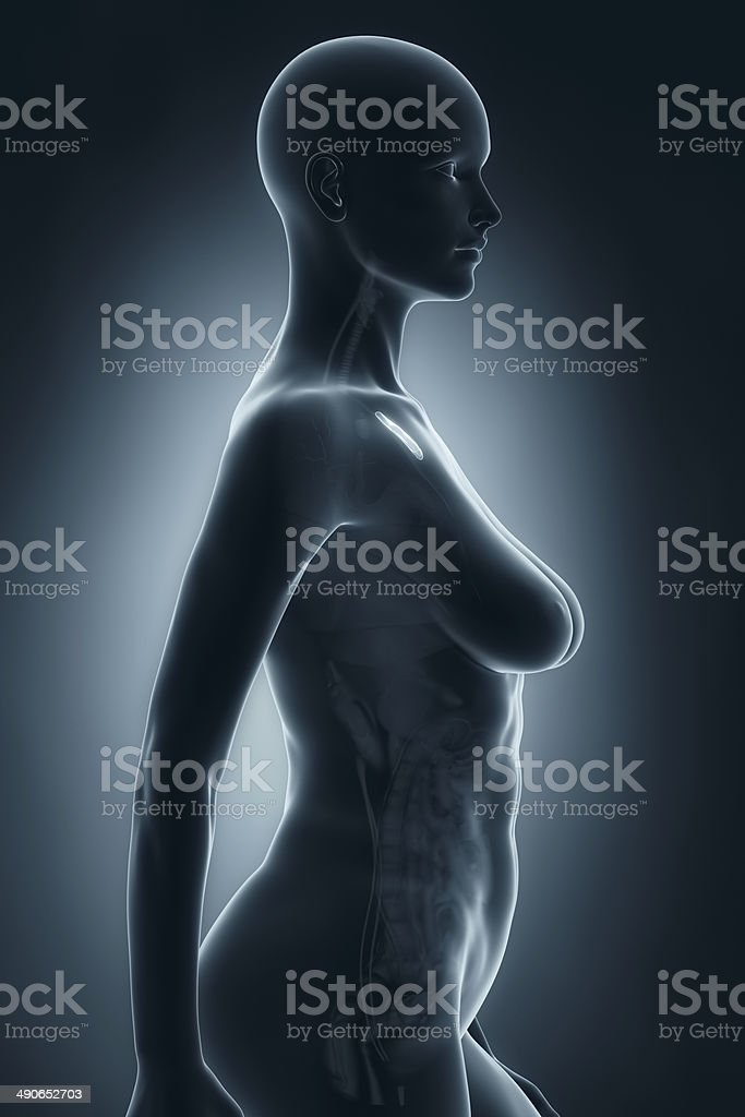 Woman thymus anatomy x-ray lateral view stock photo