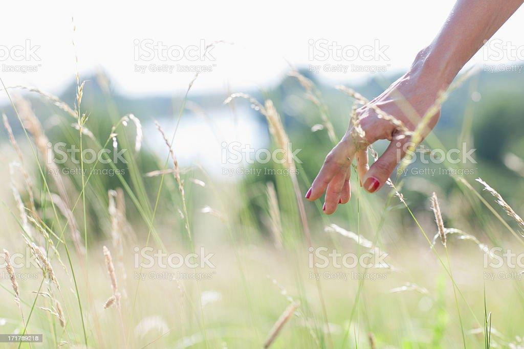 Woman touching tall grass stock photo
