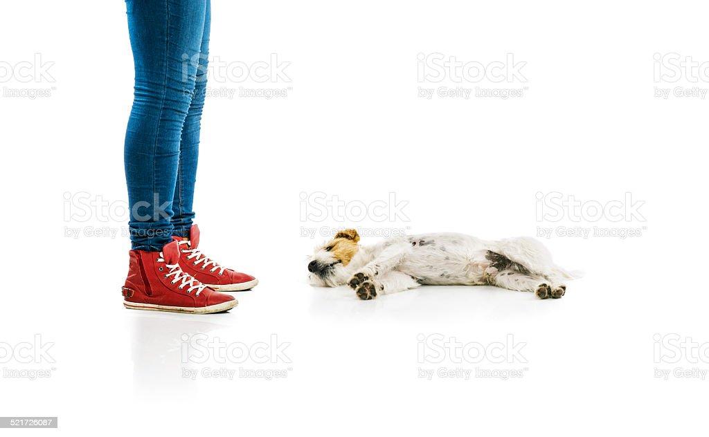 Woman training dog isolated stock photo
