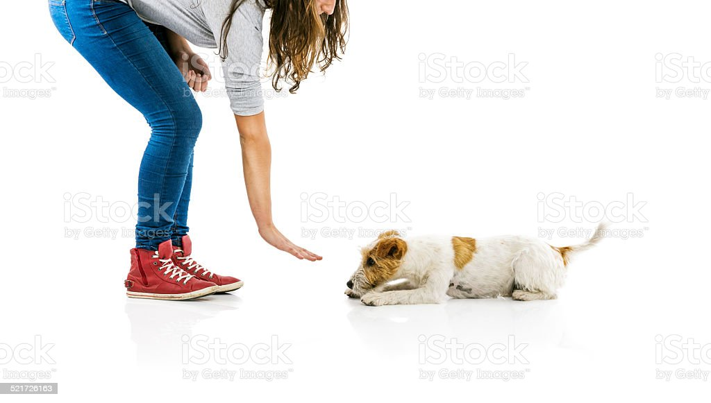 Woman training dog isolated stock photo