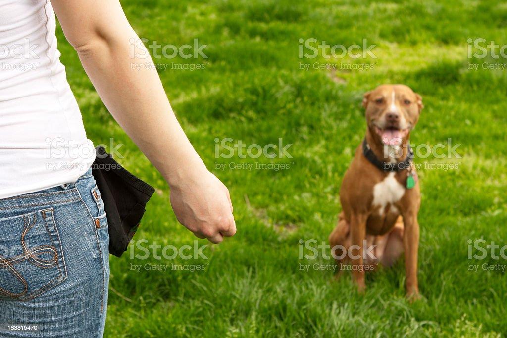 Woman training dog on a grass field stock photo