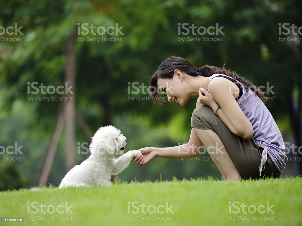 Woman Training Dog Shaking Hand and Communication- XXXXXLarge stock photo