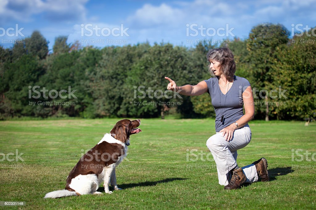 woman training her dog stock photo