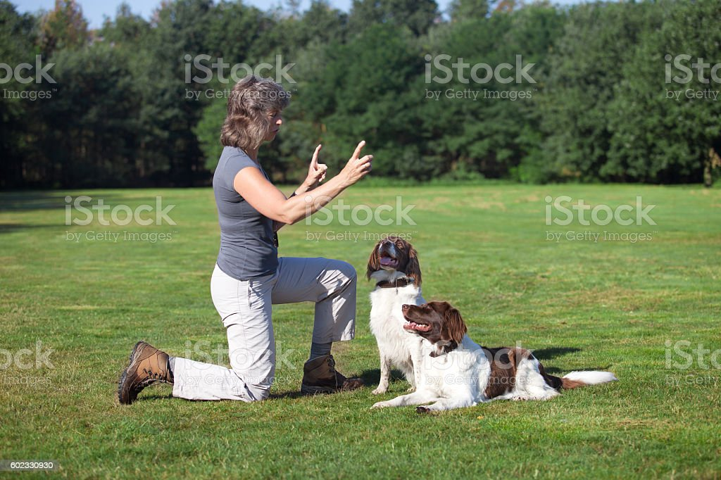 woman training her two dogs stock photo