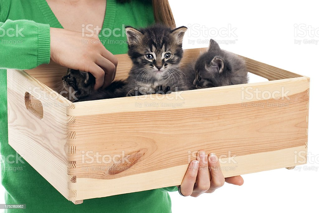 Woman Transporting kittens with box royalty-free stock photo